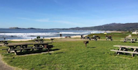 Penn Club of Silicon Valley:  Beach Habitat Restoration